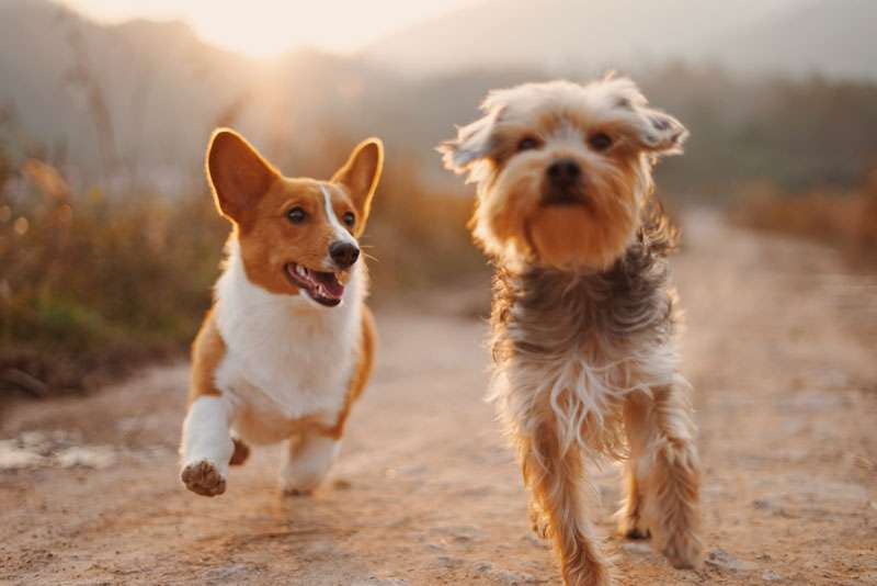 cute dogs running