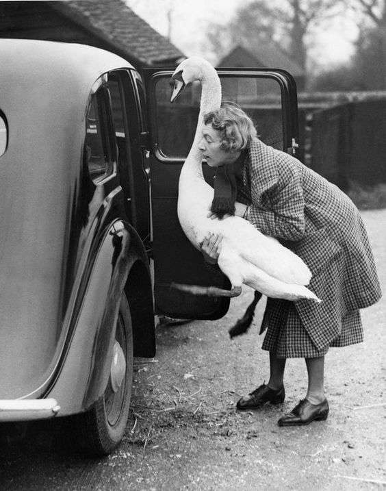 woman putting swan in car