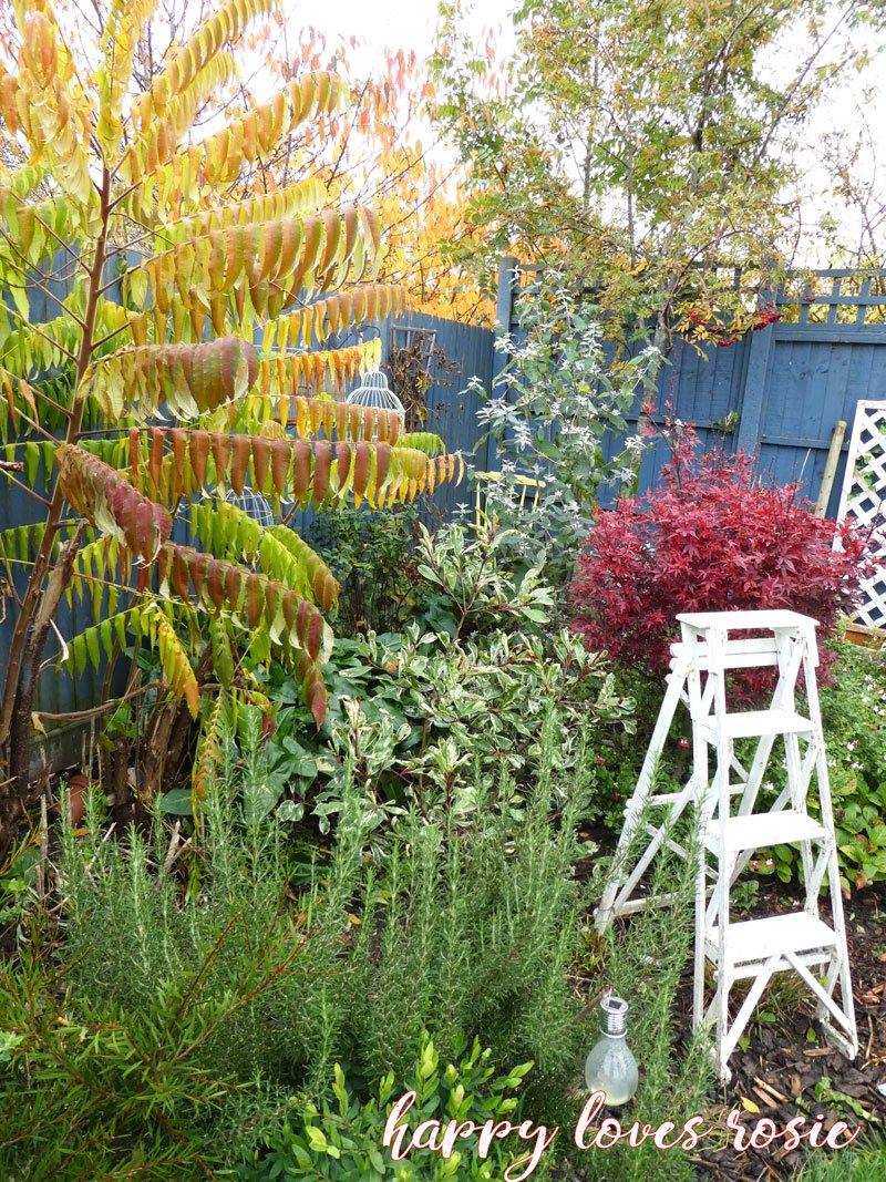autumn english garden