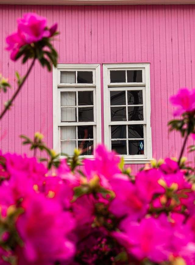 oink house with pink flowers and white window