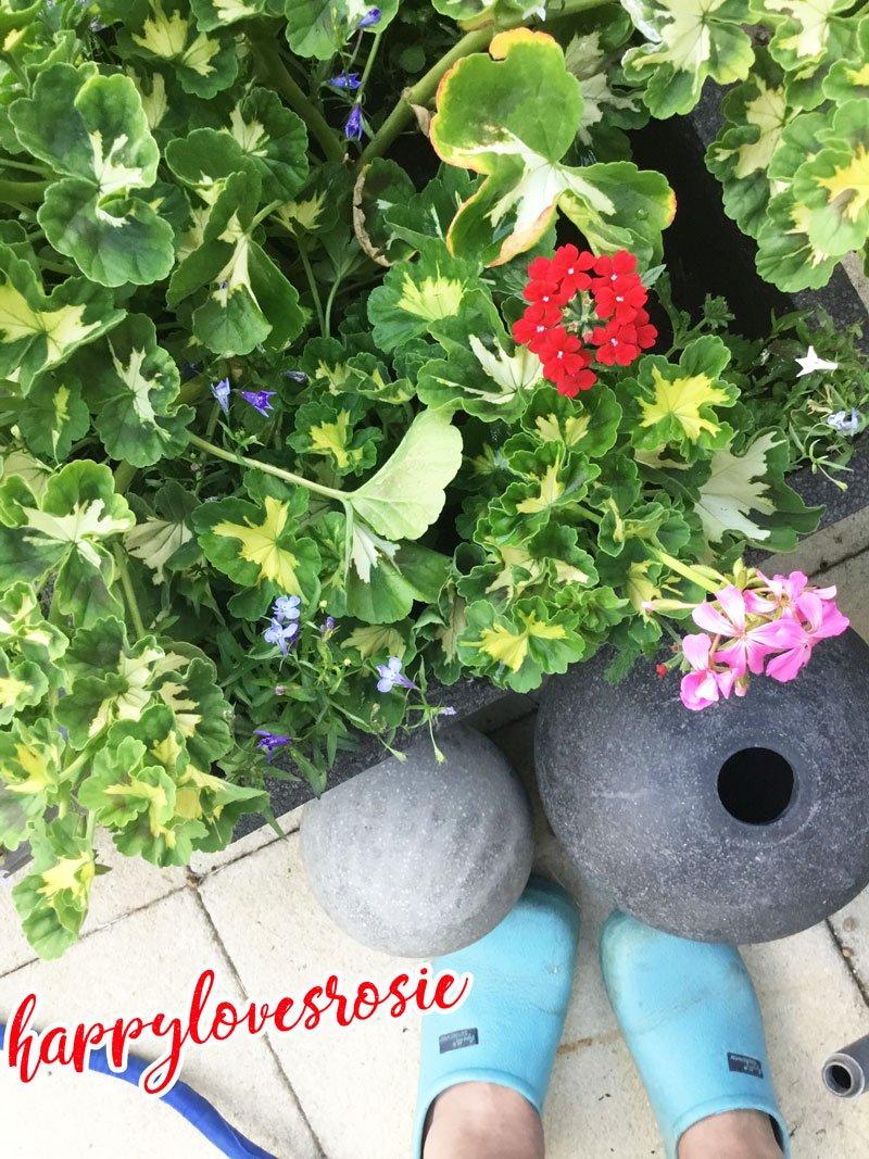 geraniums pots and shoes